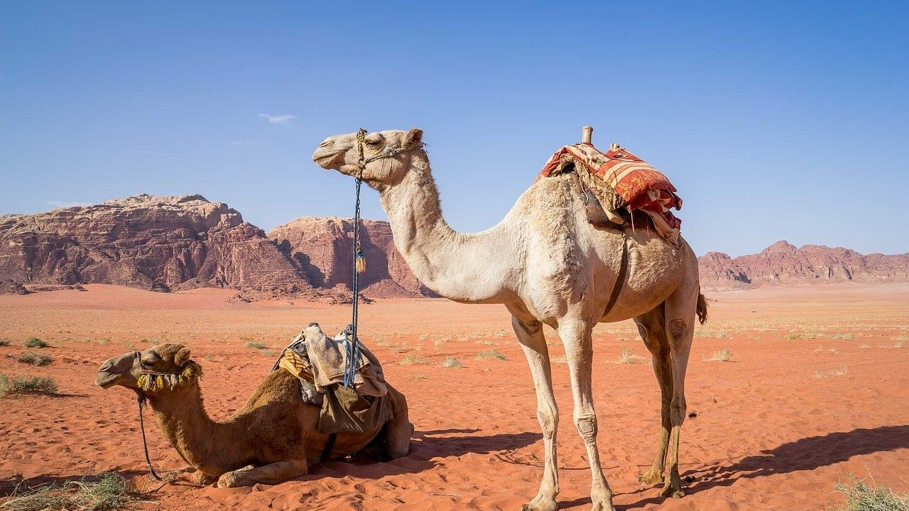 面白い 夫婦の会話 | 中東を語る夫