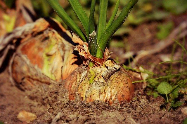 発芽玄米を食べてマクロビ | 簡単な4つのルール