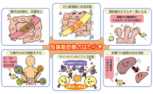 スリビア!ビセラ【腸活サプリ7種】の口コミから徹底調査